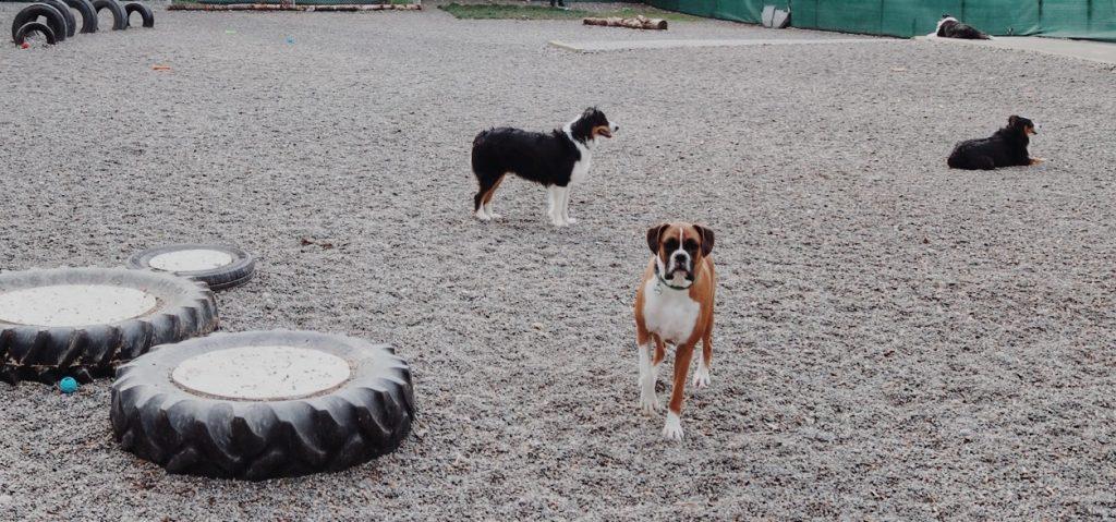 puget hound play yard