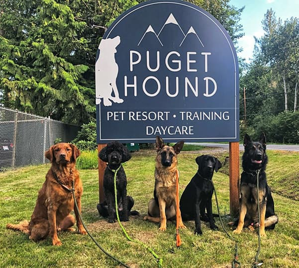 puget-hound-training-dogs-in-front-of-sign-crop
